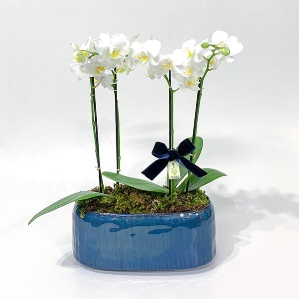 Arranjo de Orquídea Phalaenopsis Branca em Jardineira Esmaltada - M