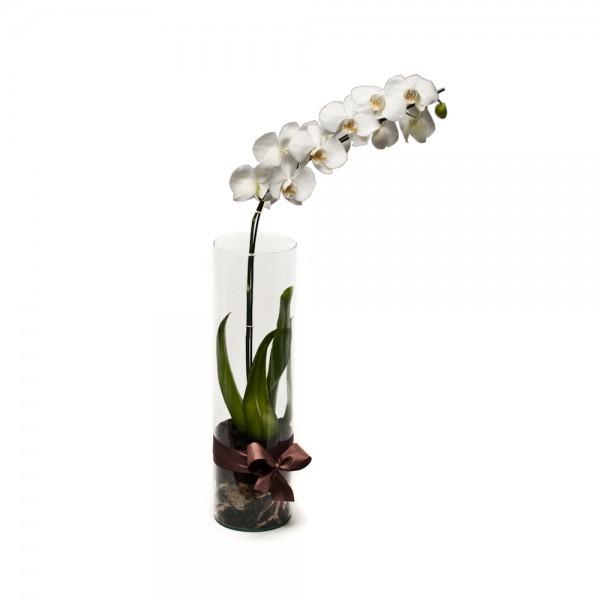 Arranjo de Orquídea Phalaenopsis Branca em Cilindro - G