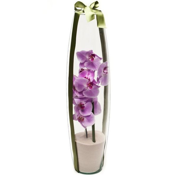 Arranjo de Orquídea Phalaenopsis Pink em Torpedo - G