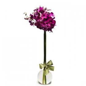 Arranjo de Orquídea Denphale Pink em Balão - P