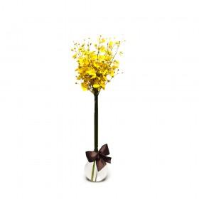 Arranjo com Orquídea Chuva-de-Ouro em Baláo G