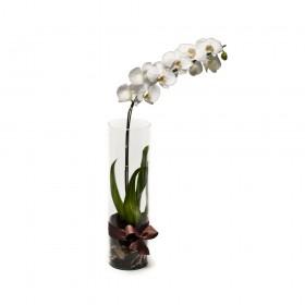 Arranjo com Phalaenopsis Branca em Cilíndro- G
