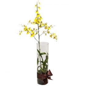Arranjo de Orquídea Chuva de Ouro em Cilindro - G