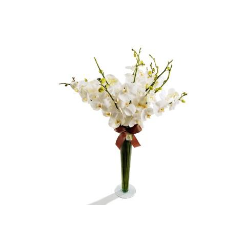 Arranjo de Orquídea Phalaenopsis branca em Taça de Vidro G