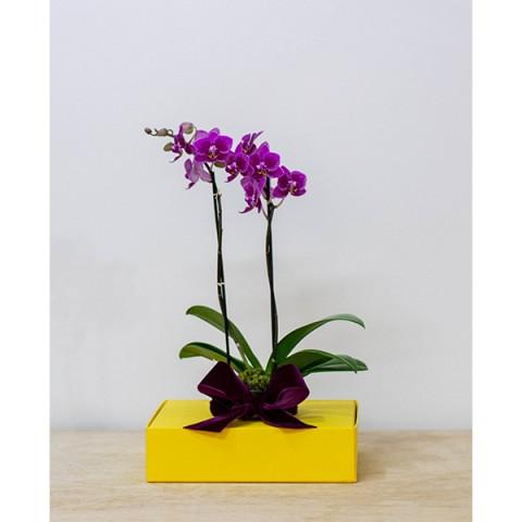 Arranjo com Mini Orquídea Plantada em Caixa de Papel - M