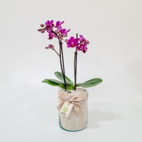 Arranjo de Mini Orquídea Phalaenopsis Pink em Copo de Vidro Alto - M
