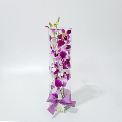 Arranjo de Orquídea Denphale Pink em Cilindro Fino - M