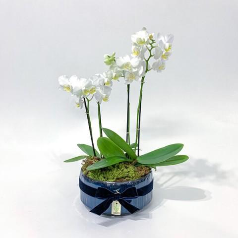 Arranjo de Orquídea Phalaenopsis Branca em Bacia Esmaltada - M