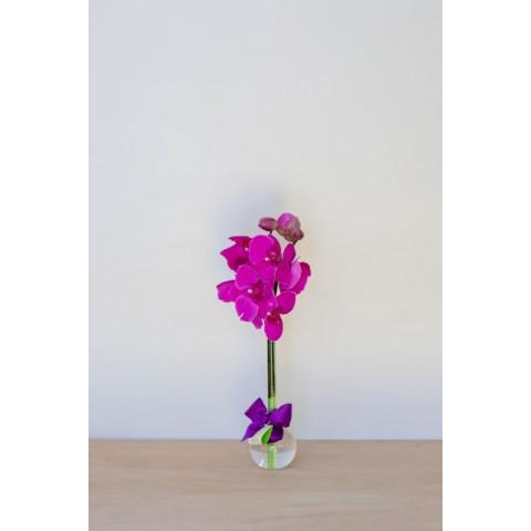 Arranjo com Orquídea Phalaenopsis Pink em Balão P