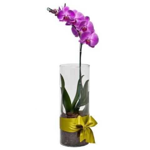 Arranjo com Phalaenopsis Pink em Cilíndro- G
