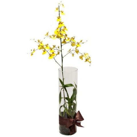 Arranjo com Orquídea Chuva-de-Ouro em Cilindro- G