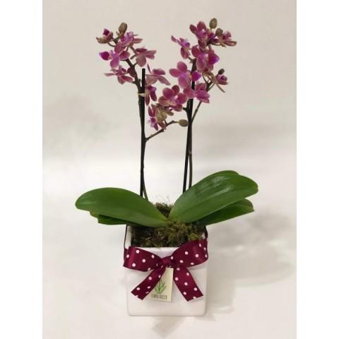 Arranjo de Mini Orquídea Phalaenopsis em Cubo de Porcelana - P