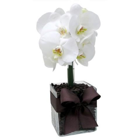 Arranjo de Orquídea Phalaenopsis Branca em Cubo de Vidro - P