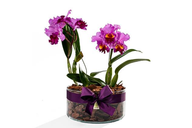 Arranjos de orquídeas.